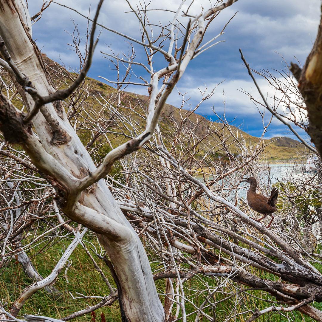 Circuitos en Torres del Paine Avistamiento aves