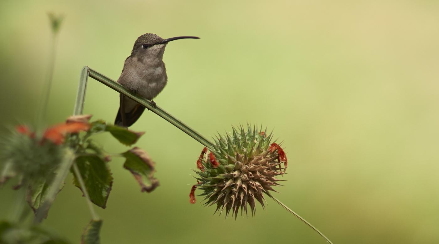 Santuario del Picaflor- una imagen del ave posada en una rama