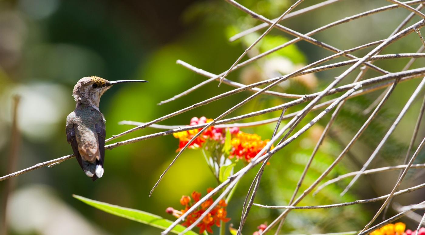 Santuario del Picaflor- una muestra del ave en medio de la naturaleza