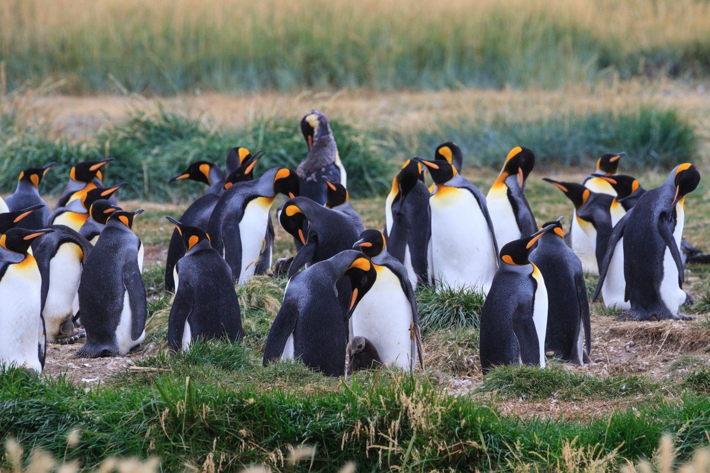 Tierra del Fuego - Parque Pinguino Rey