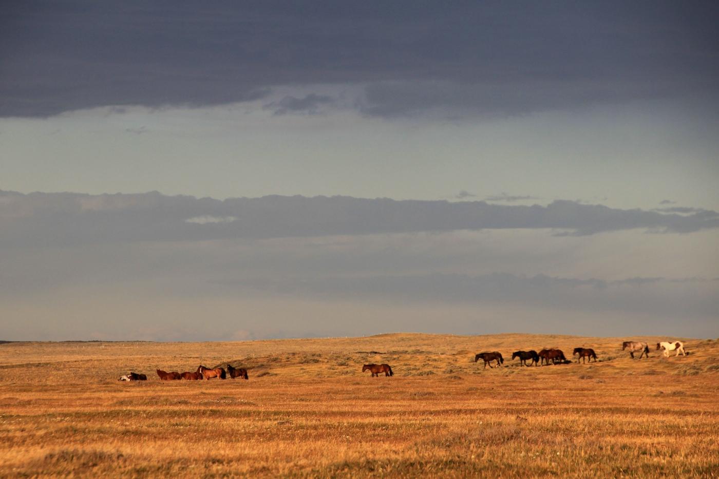 Tierra del Fuego- imagen de caballos salvajes en Porvenir