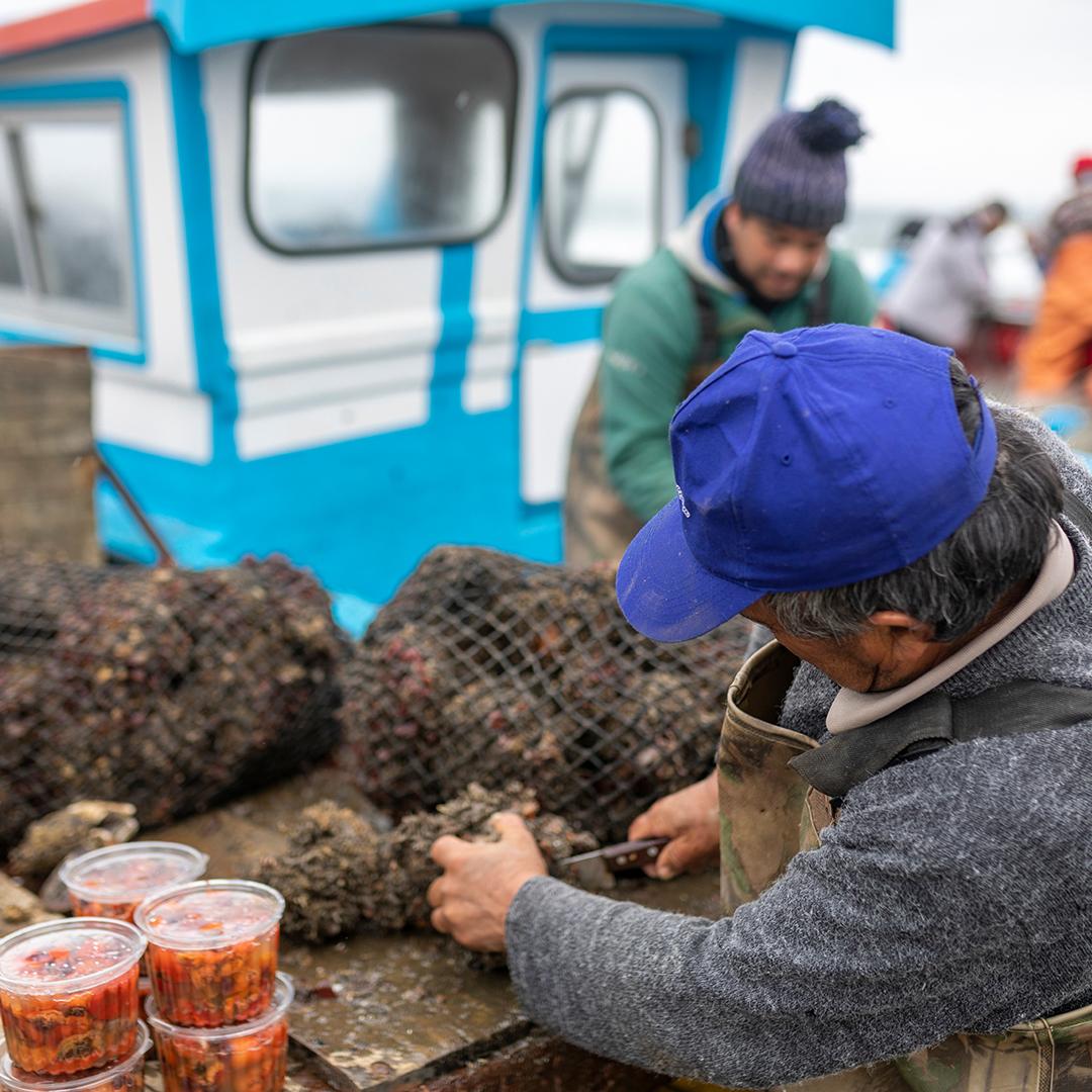 Pescador envasando mariscos frescos