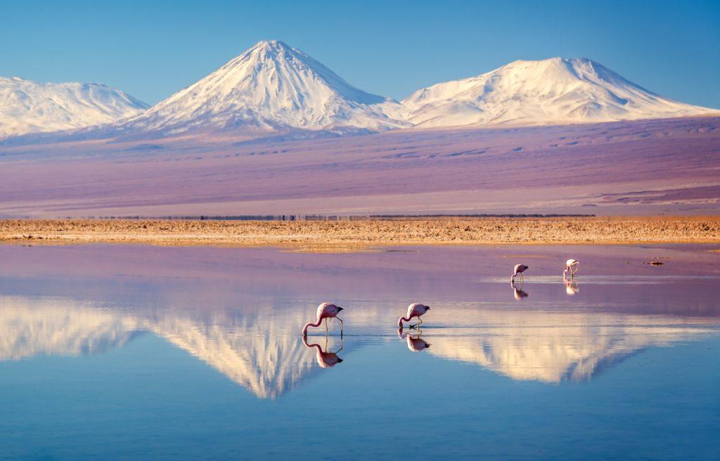 Flamencos en el norte de Chile